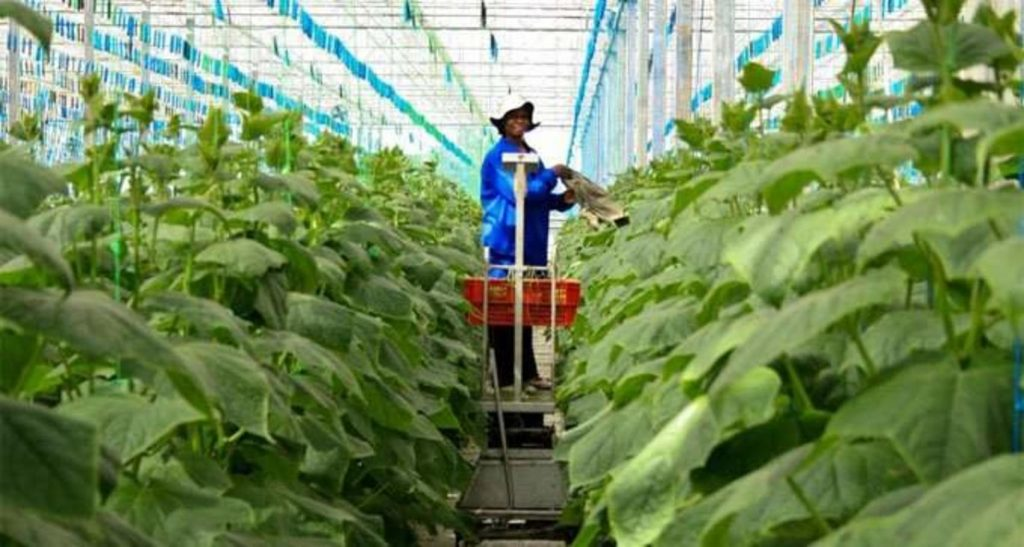 private sector agriculture